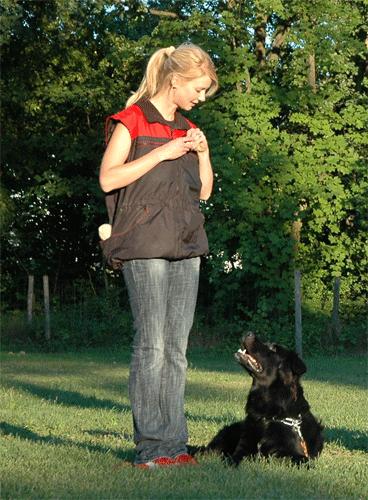 dog-sports (2)